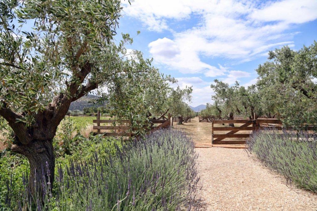The Margi Farm, Αγροτουρισμός σε φάρμα της Αθήνας